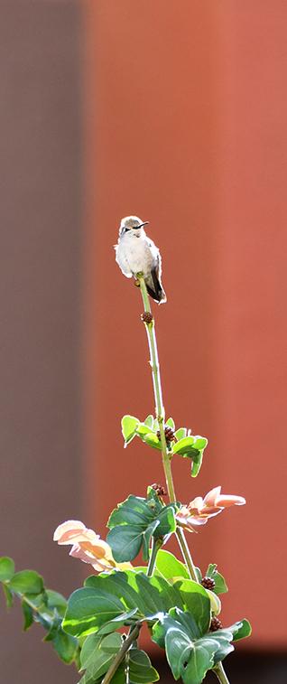 Misc. Photography of a Hummingbird