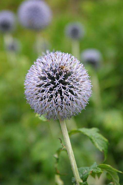 Misc. Photography of Inverewe Garden